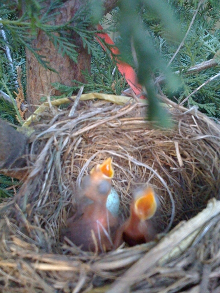 @twittelator ~> the twittelator eggs have hatched!