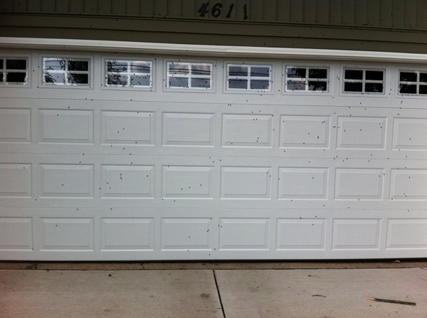 The little black dots all over my garage door are the bugs! Yuck!!!