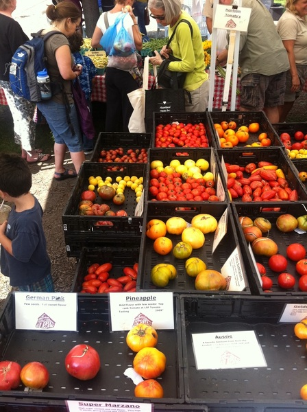 Green City Market: Leaning Shed has 22 kinds of tomatoes+heirloom tomatillos (yellow ripe ones, too),h'loom chiles