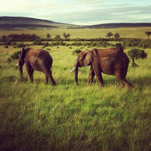The one shot I have of the animals on the Serengeti! The rest I have on my pro canon. Will post later :-)