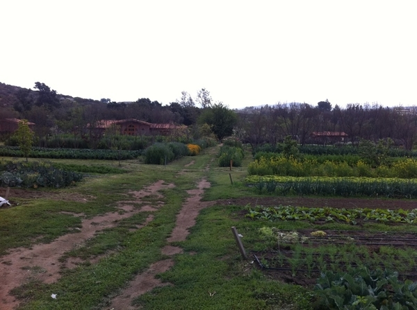 Tecate (town,not beer): filmed at Rancho La Puerta production gardens w Salvador, most passionate gardener I know