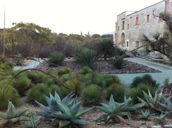 Tour of Oaxaca Ethnobotanical gardens, treasure of Mexico. Only native plants (incl medicinal &amp; culinary)