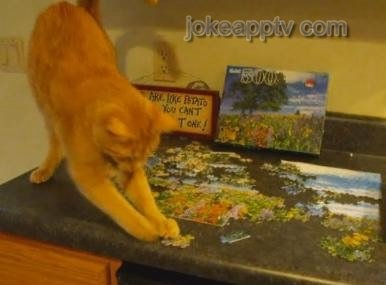 cat does puzzle