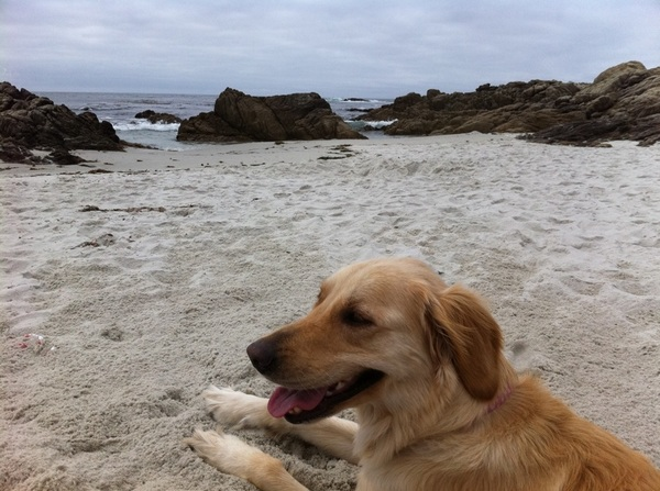 Golf in the morning now a beach day with Cabo. #pebblebeach