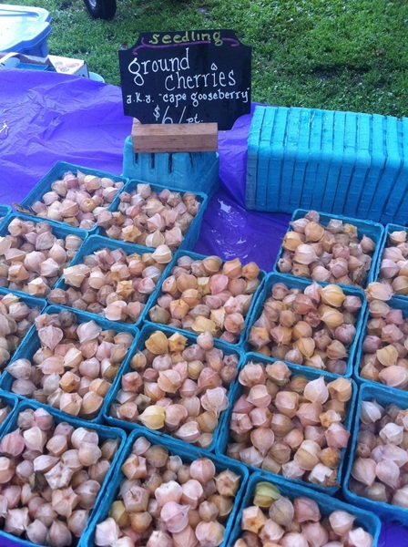 Wicker Park Farmers Mkt: Seedling has great ground cherries. I&#039;m buying them for a tart tonight. 