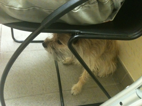 Chewie hiding at