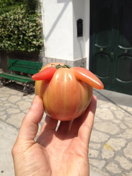 This is one horny tomato! #DeformedVegetableInCapri