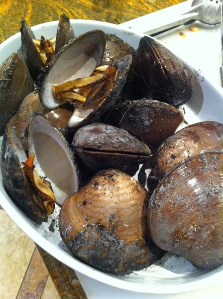 At Cabo beach house: chocolata clams taste of sea/sand/smoke; mustard sauce, chipotle sauce, mexicana mayo 