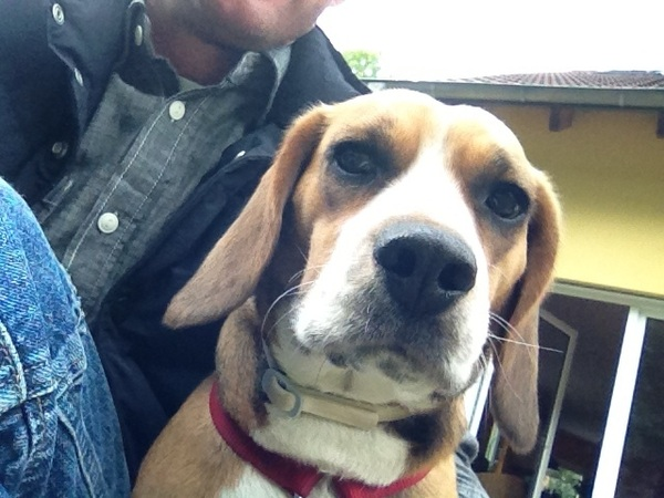 Beagle und ich chillen bisschen im Garten! 