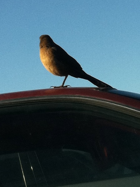 wtff this bird only has one leg!!! wtff! does this mean something? hahah